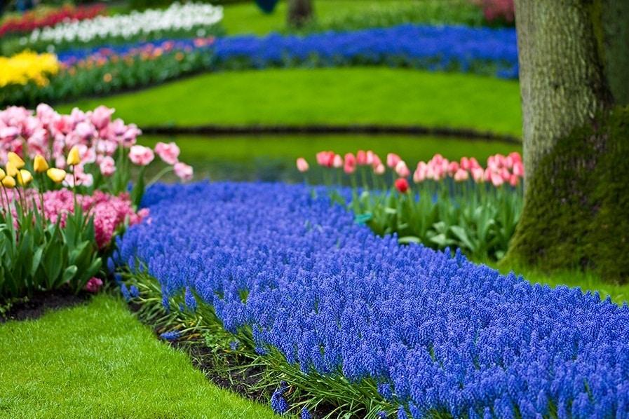 Des fleurs éclatantes créent une atmosphère de vacances particulière