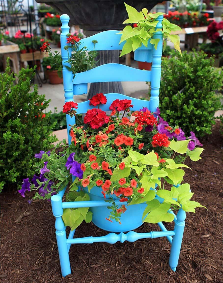 Pour une harmonie optimale, il est très important d'avoir la bonne combinaison des couleurs des plantes dans le parterre de fleurs.