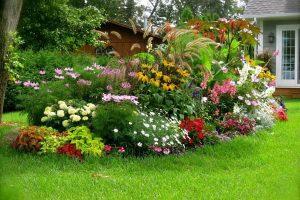 Fleurs pour parterres de fleurs