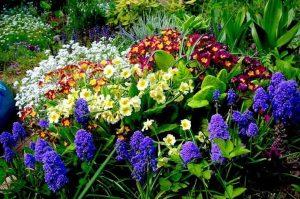 Parterres de fleurs à la campagne