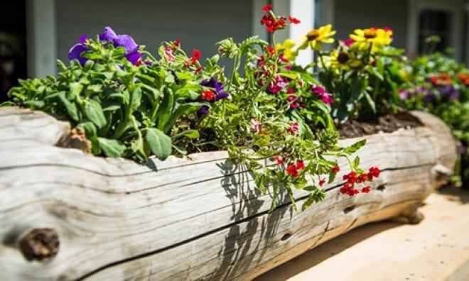 Un beau parterre de fleurs organisé dans une vieille bûche sèche