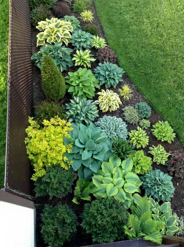 Aménagement pratique d'un parterre de fleurs avec de belles plantes vivaces
