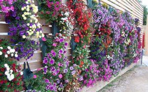 Parterres de fleurs verticaux pour pétunias