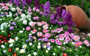 parterres de fleurs à faire soi-même à la campagne