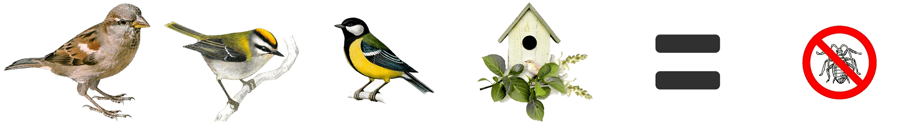 Les oiseaux contre les insectes