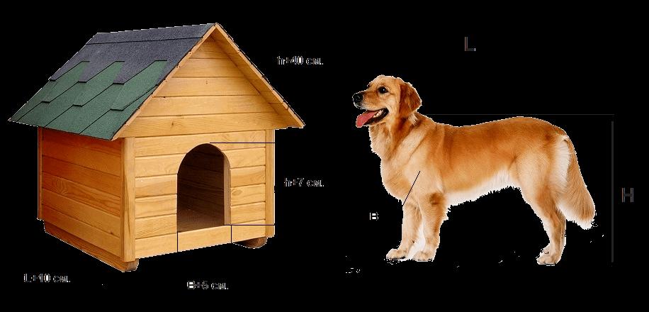 dimensions du chenil pour chiens