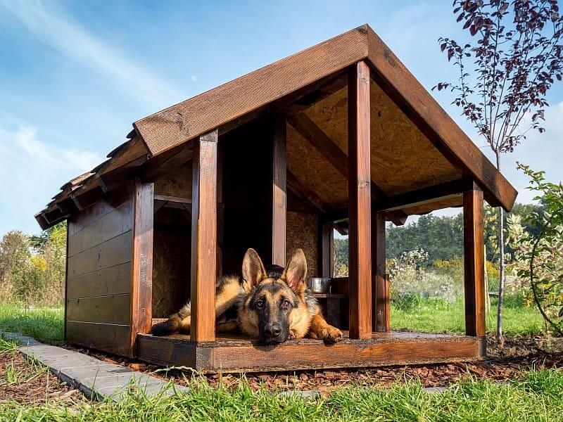 Pour utiliser pour la construction du chenil un autre matériau que le bois, les experts ne recommandent pas