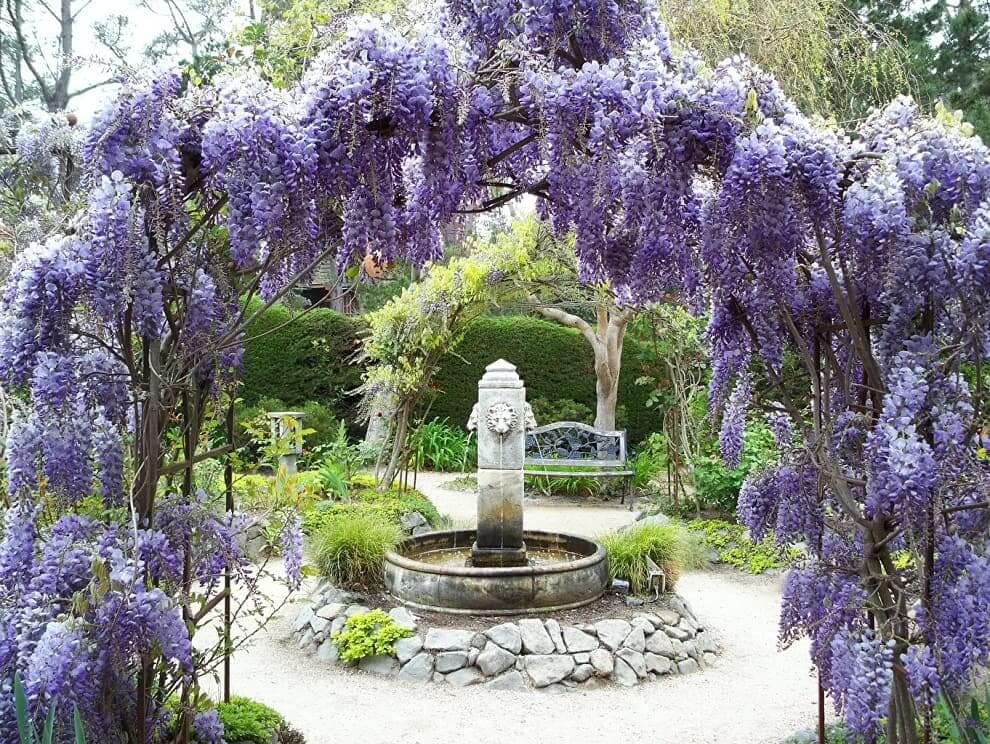 Arche de fleurs de glycine originale