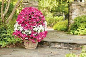 original pour le jardin et les chalets d'été