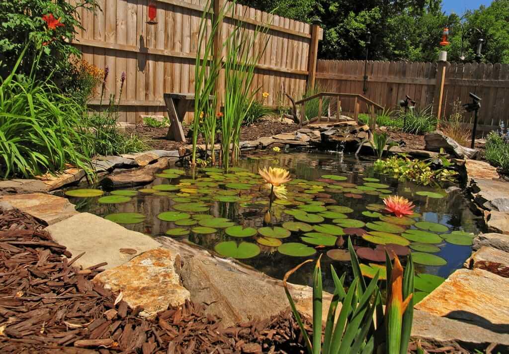 L'étang du jardin est un endroit idéal pour passer un bon moment