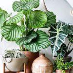 types de plantes d'intérieur