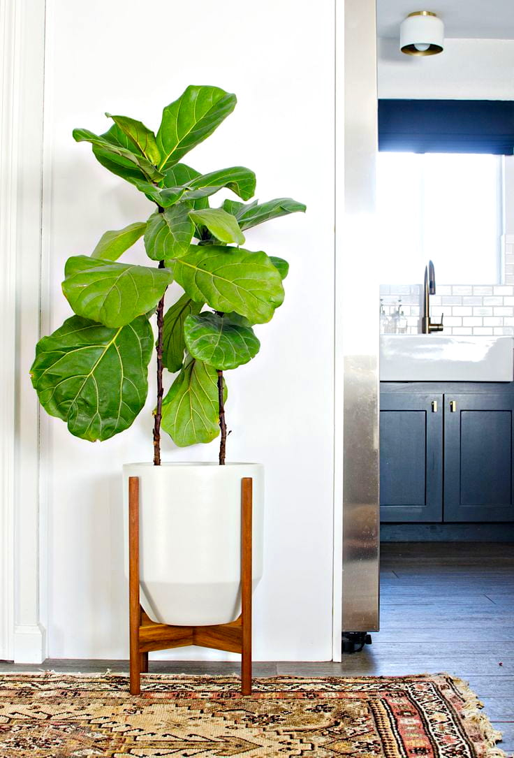 Зеленый цвет прекрасно контрастирует с белым, поэтому оптимальным решением будет разместить растение на фоне белоснежной стены