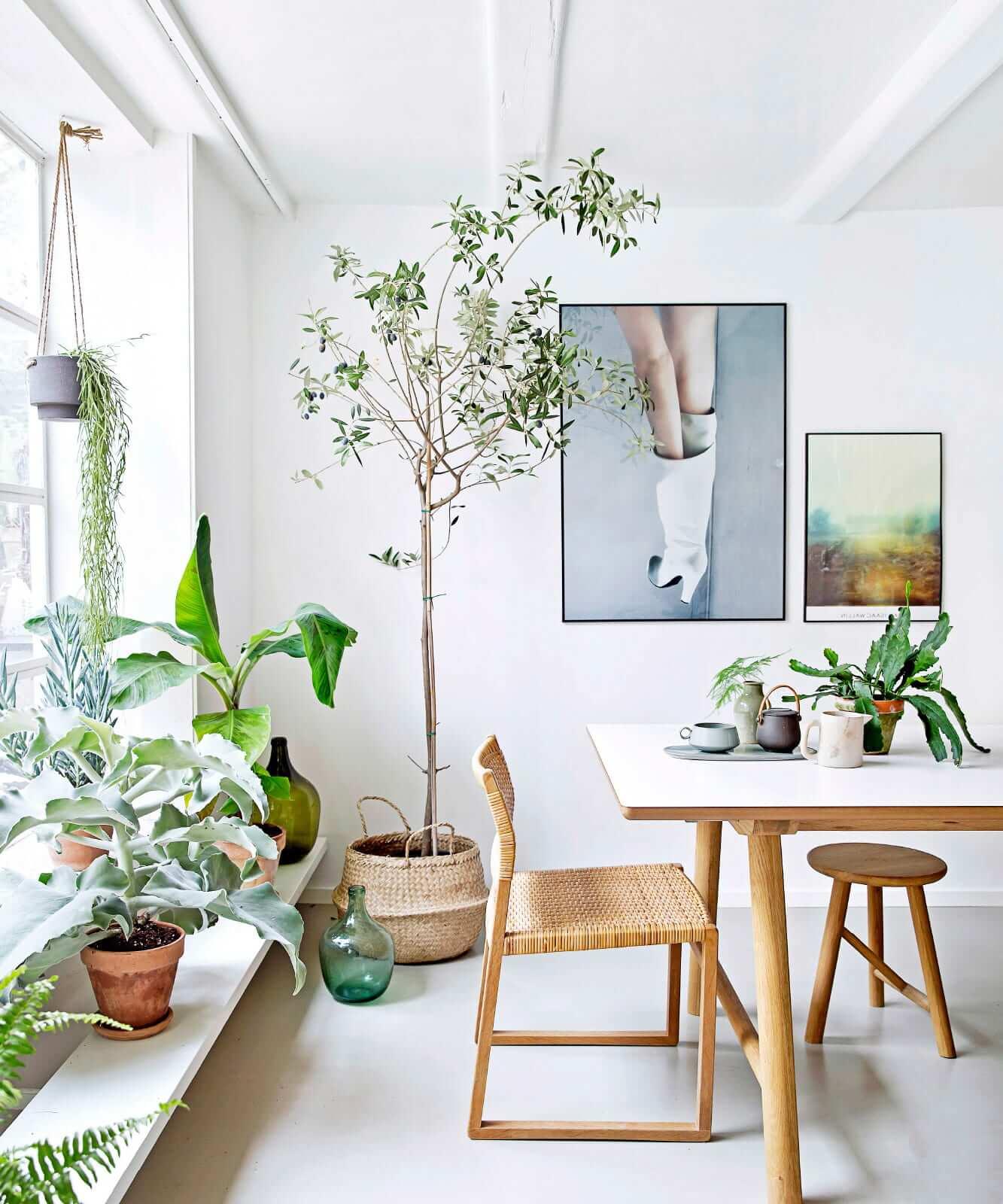 Светлый интерьер гостиной с красивыми комнатными растениями