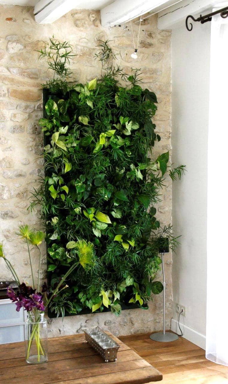 Фитомодуль из растений - стильный способ декорировать стену