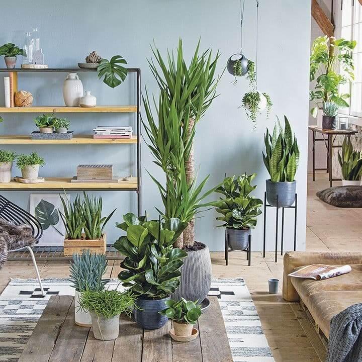 Комнатные растения способствуют улучшению микроклимата в доме