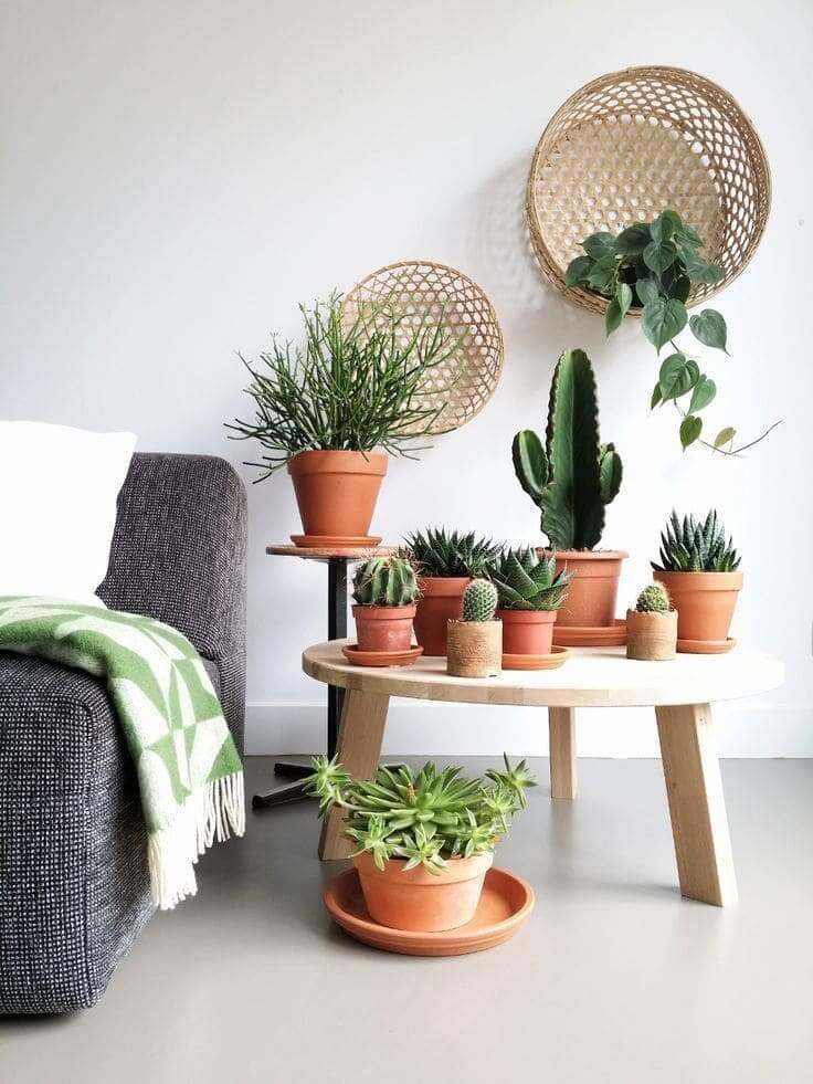 Чудесная композиция из маленьких кактусов в глиняных горшках