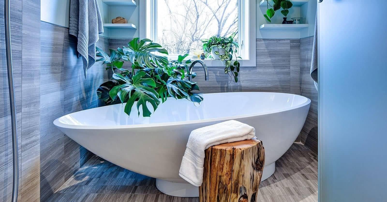 Monstera (attrayant) - rendra votre salle de bain spéciale