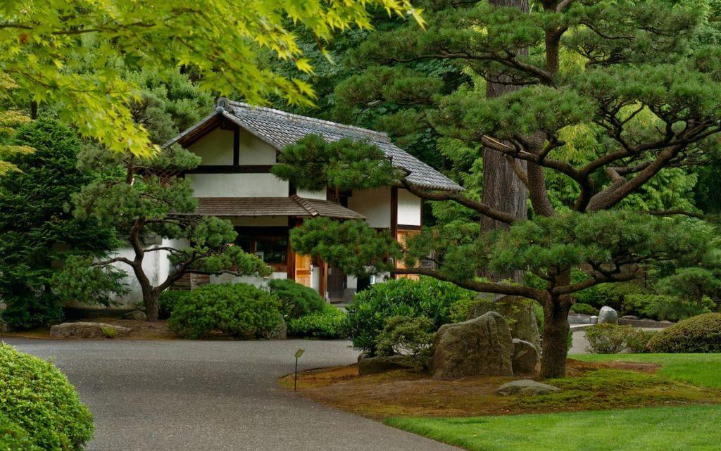 Parcelle près de la maison avec des pins à grosses branches