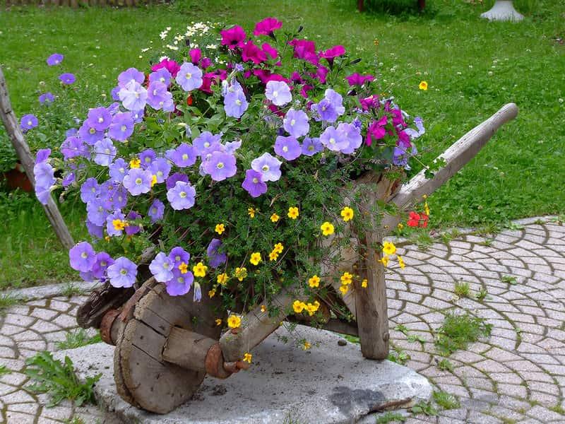Не спешите выбрасывать старую тачку для песка, из нее выйдет отличная клумба которая украсит ваш сад