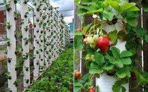 Вертикальные клумбы для земляники