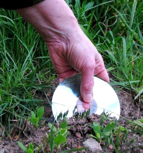 Вставлять в землю диск следует таким образом, чтобы его большая часть оставалась на поверхности