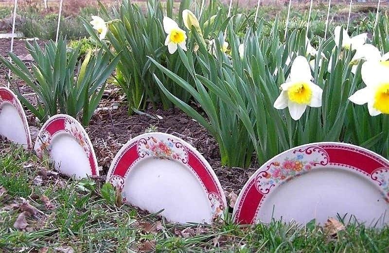 Создавать ограждение из фарфоровых тарелок очень просто и увлекательно