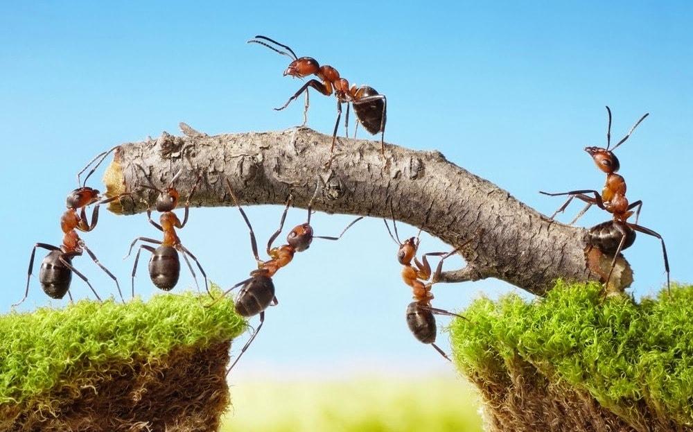 Чаще всего муравьи строят свои гнезда в корневой системе растений и деревьев