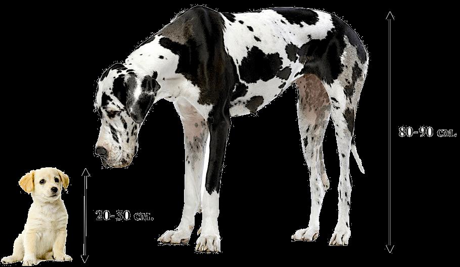 размеры собак