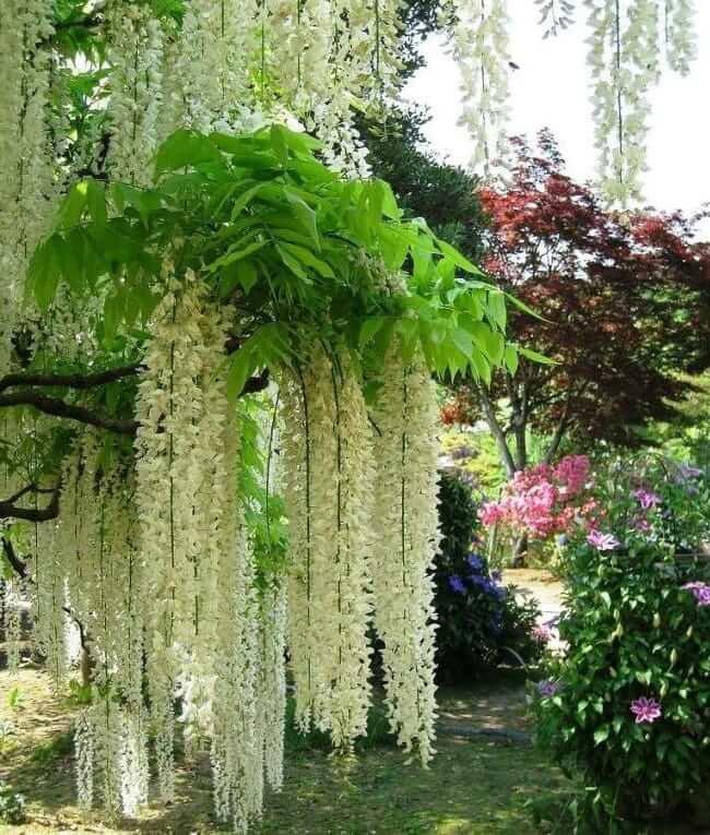 Чудесный сад с красивыми деревьями