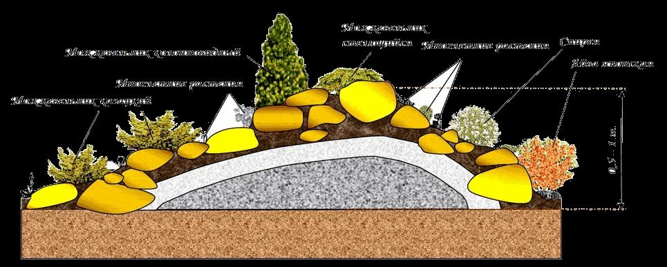 Растения и цветы для альпийской горки