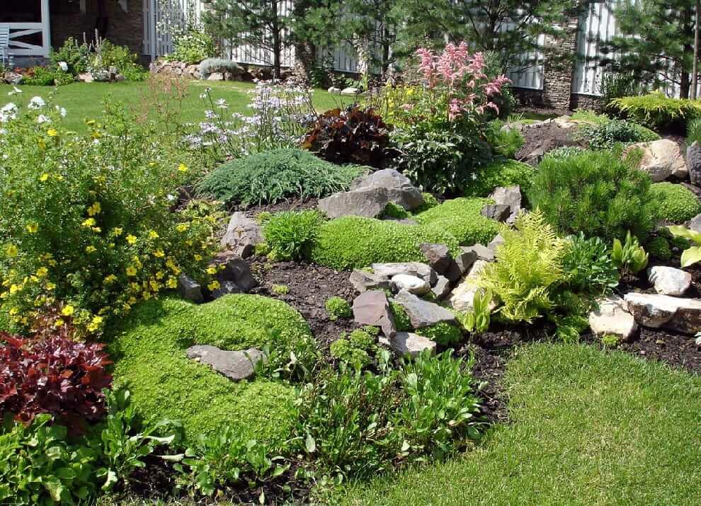 Как говорят бывалые дачники - в саду зеленых растений много не бывает