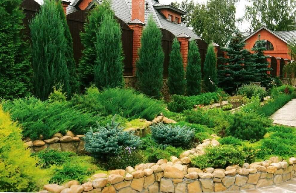 Для украшения альпийской горки отлично подойдут низкорослые и стелющиеся растения