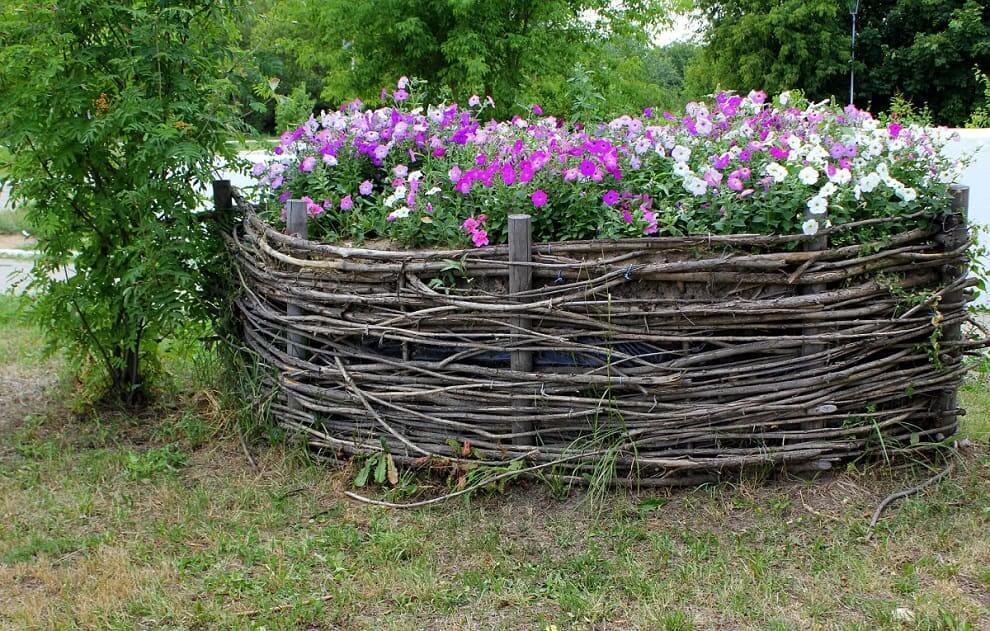 Аккуратная клумба из петуний, станет настоящим украшением для вашего сада