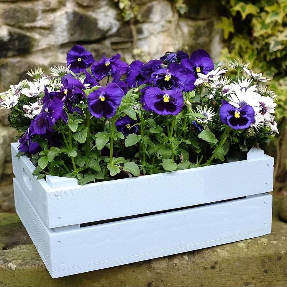 С ящиком выкрашенным в белый цвет будут прекрасно контрастировать яркие цветы