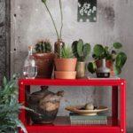 растения на передвижном столике