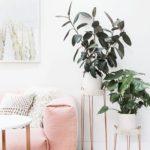 идеи по размещению комнатных растений