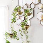 красивые комнатные растения на стене