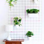 растения на фоне белой стены