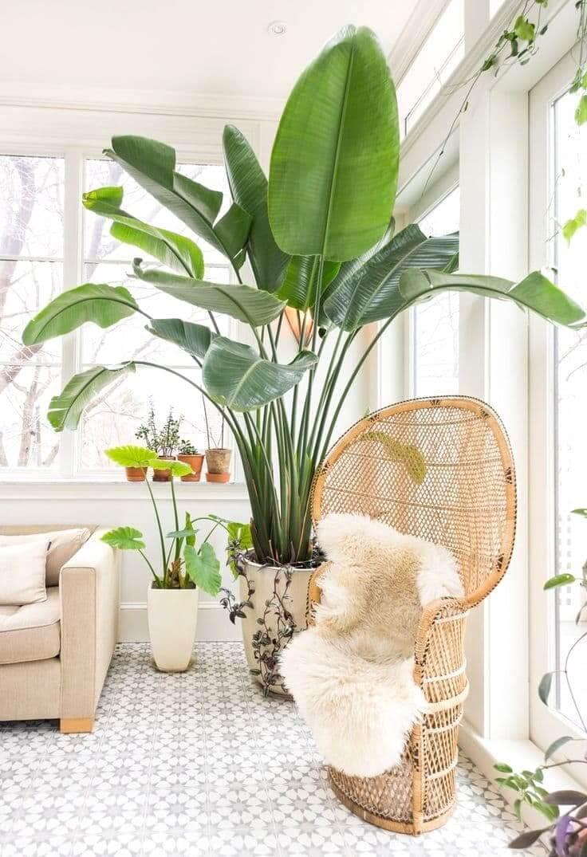 Растение с большими листьями станет прекрасным дополнением как классического, так и современного интерьера