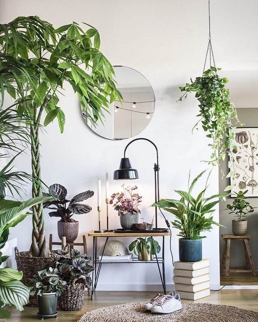 Прекрасное соседство разнообразных видов растений в интерьере гостиной