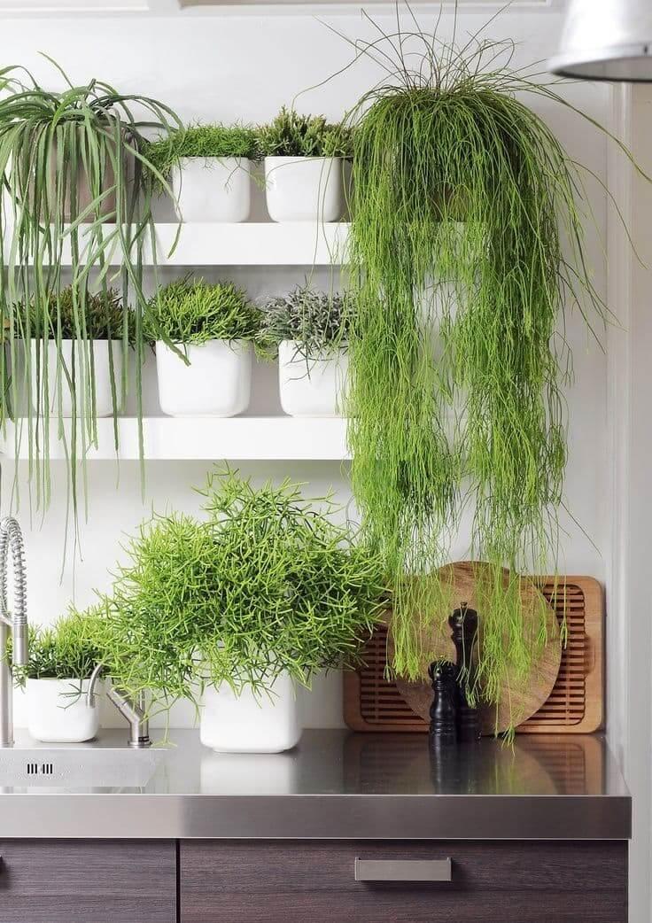 Навесные полки - идеальное место на кухне для растений в горшках
