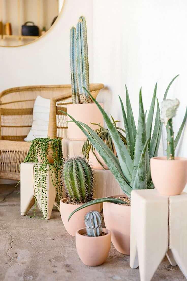 Несмотря на то, что кактус является неприхотливым представителем флоры и фауны, он также требует надлежащего ухода и внимания к себе