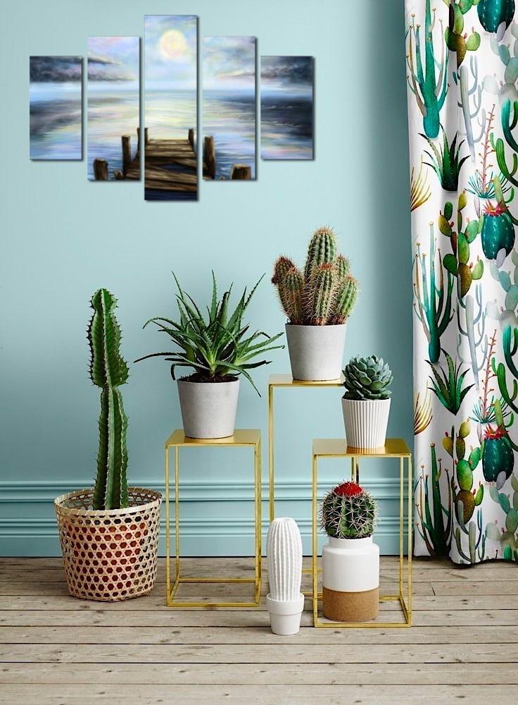 Оригинальная композиция из различных видов домашних кактусов
