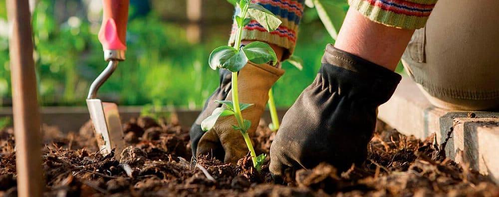 Тенистые места в саду традиционно являются неподходящими для выращивания клеомы