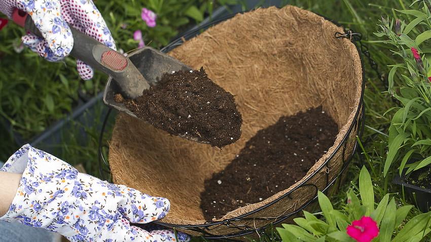 Смешав сухую подкормку с древесной золой вы получите отличное удобрение для своих зелёных питомцев