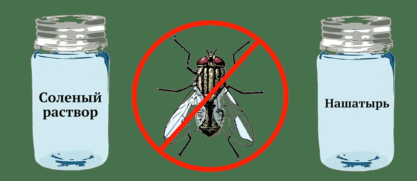 методы борьбы с луковой мухой