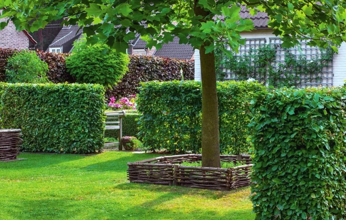 Красивый сад с ухоженным зелеными кустами