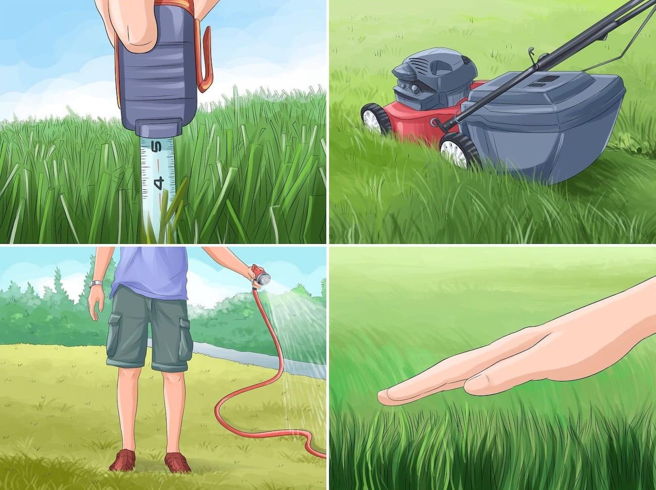 Окончив стрижку, газон нужно обязательно полить, после этой процедуры он сразу зеленеет